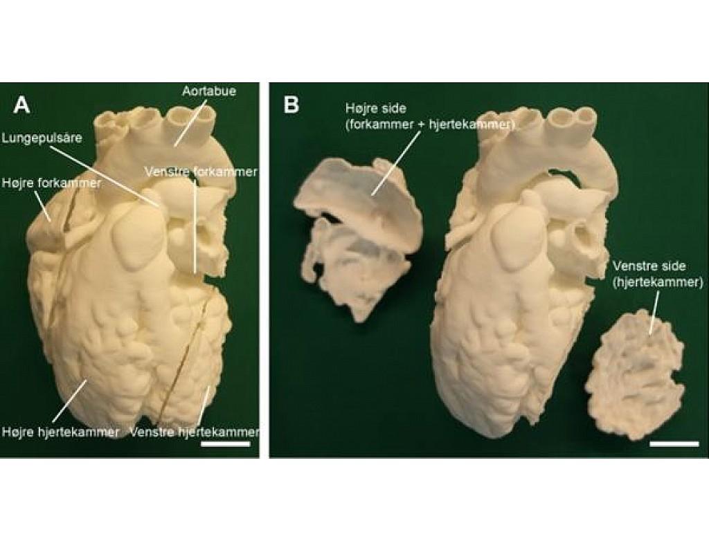 3D printed medical models to understand animal anatomy