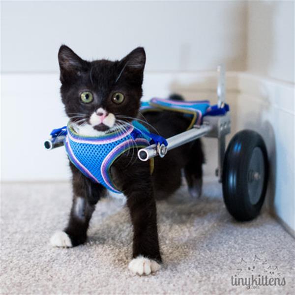 3D printed Wheelchair for Kitten