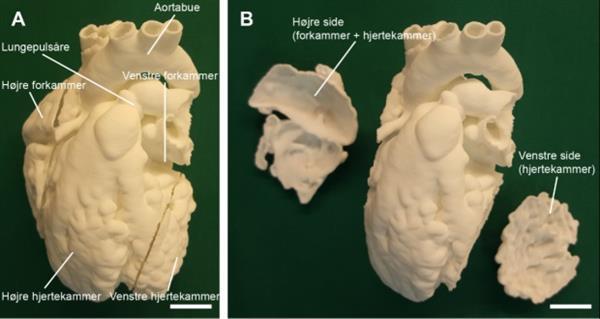3D printed animal anatomy